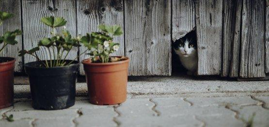 Neben Paul und Ramona sind auch zwei Hofkatzen schon eingezogen © Allgäu GmbH, Philip Herzhoff